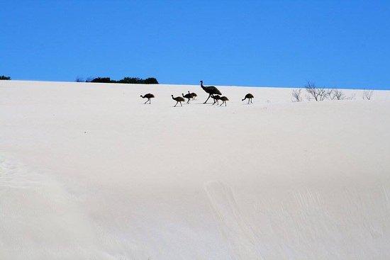 Australia Meridional, Australia: photo3.jpg