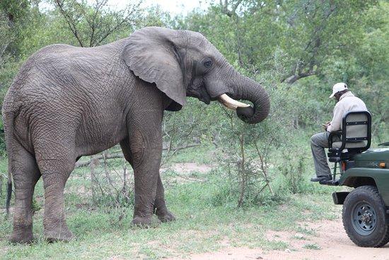 Tangala Safari Camp: Up close and personal!