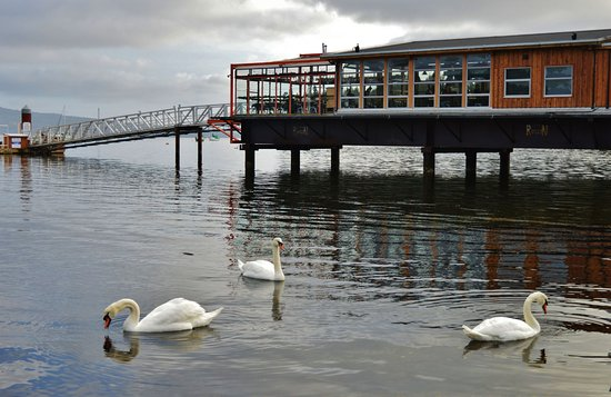 Mill Bay, Canada: Favourte hangout for swans. We have seen as many as 17 in the Bay.