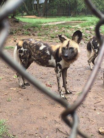 Hoedspruit, جنوب أفريقيا: photo7.jpg