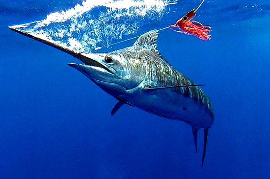 Canavieiras, BA: Sede e operação de pesca