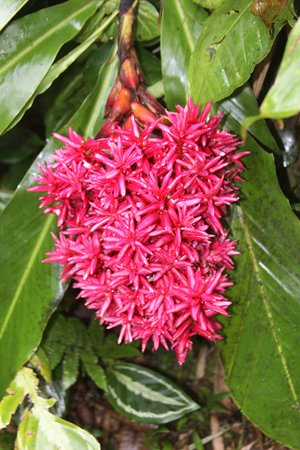 Papaikou, HI: Just one of the colorful flowering plants