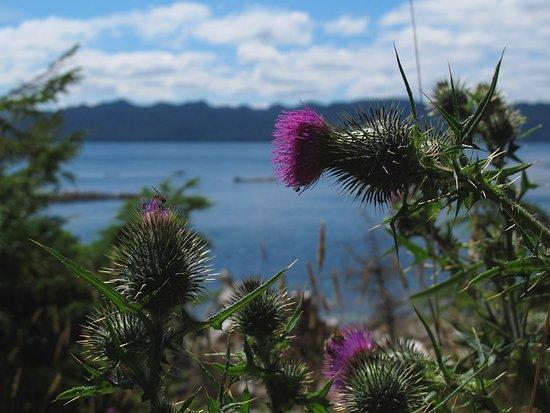 Port Hardy, Kanada: Flora