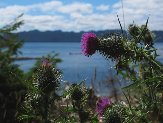 Port Hardy, Canada : Flora