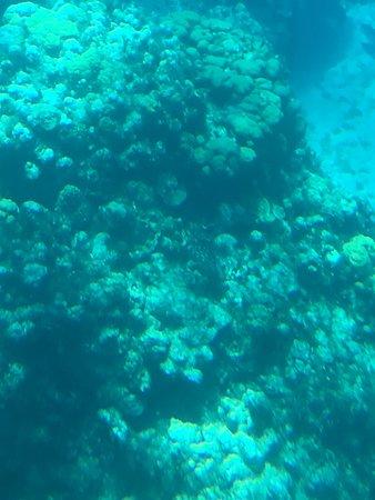 George Town, Wielki Kajman: Coral