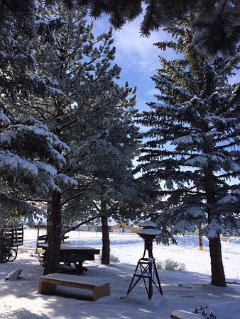 Saratoga, WY: Snow capped pines by our historic logging sleigh.