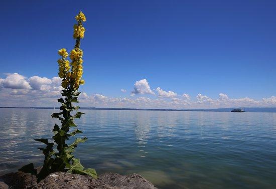 Arbon am Bodensee