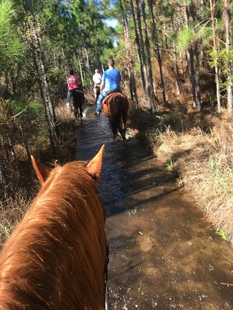 Arnett's Gulfside Trail Rides: photo1.jpg