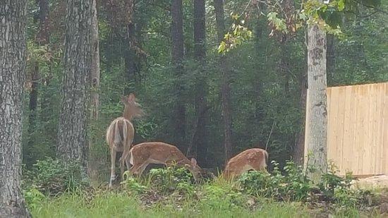 Sam Houston Jones State Park : Family of deer