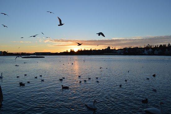 CityWalk Reykjavik: Downtown pond