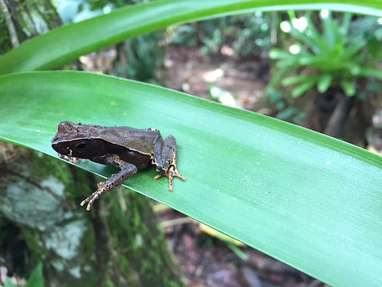 Puerto Viejo de Sarapiqui, Costa Rica: photo0.jpg