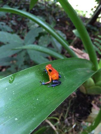 Frogs Heaven: photo2.jpg