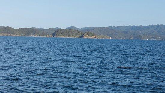 Paihia, Yeni Zelanda: looking for dolphins