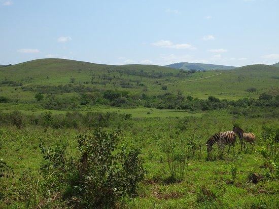 Hluhluwe, Νότια Αφρική: Landschaft