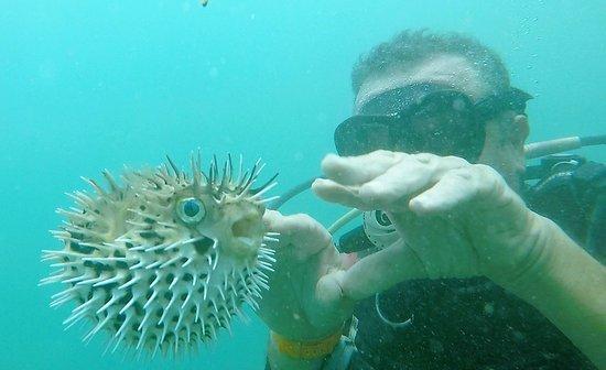 Montezuma Crew: Porcupinefish
