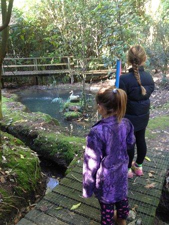 Te Puke, New Zealand: Nice pond