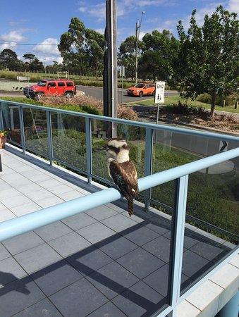 Mollymook, Australia: Balcony Visitor