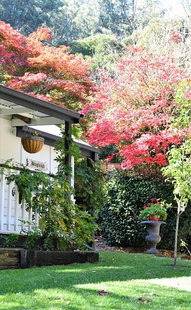 Sassafras, Australia: Dingleigh in Autumn