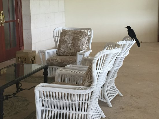 Doral, FL: My only company in the deserted Trump hotel was this bird.