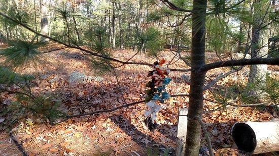 Salem, New Hampshire: Blair Witch 