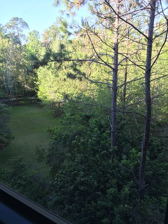 Villas at Disney's Wilderness Lodge: View from room