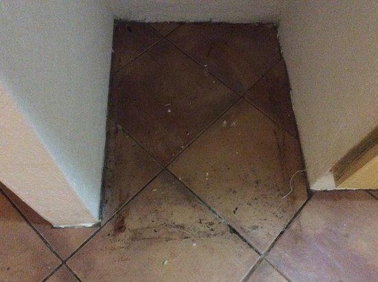 米斯馬婁亞哈利斯科蜥蜴之家全套房飯店照片
