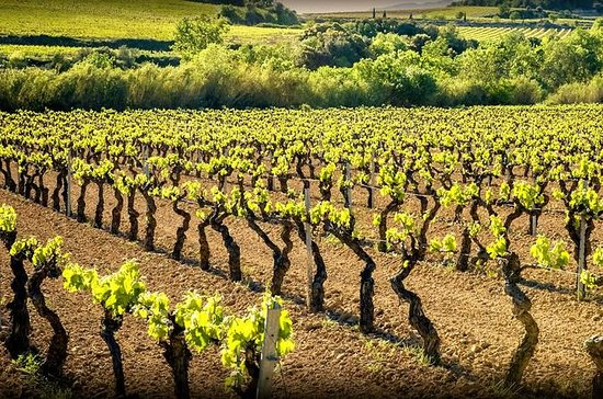 Private Cava Experience Penedes Tour ...