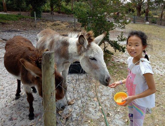 Nippers Cafe : Gentle donkeys.