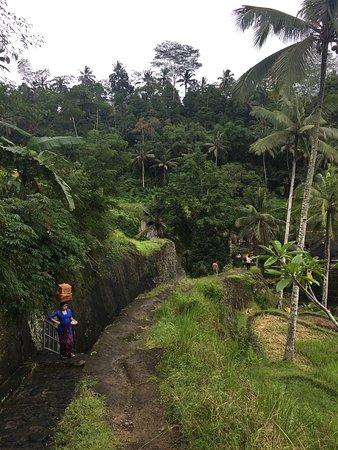 Tegalalang, Indonezja: photo0.jpg