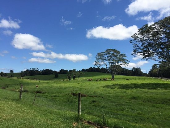 Maleny, ออสเตรเลีย: View from the Kiosk