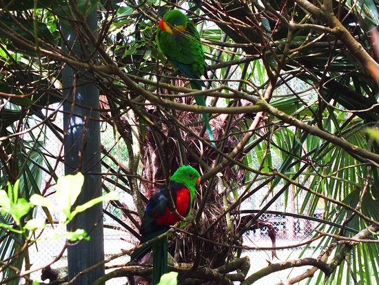 New Plymouth, New Zealand: parrot