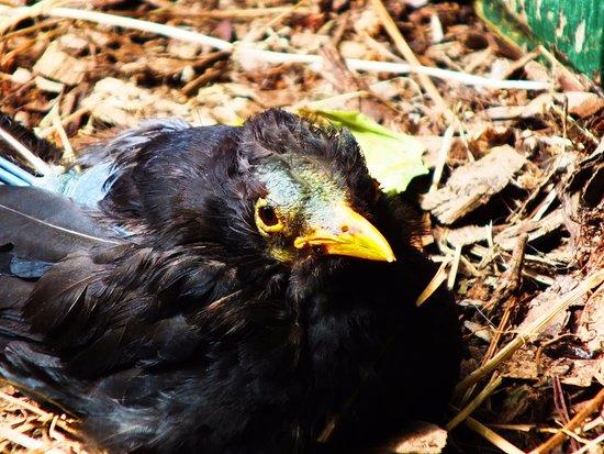 New Plymouth, New Zealand: bird