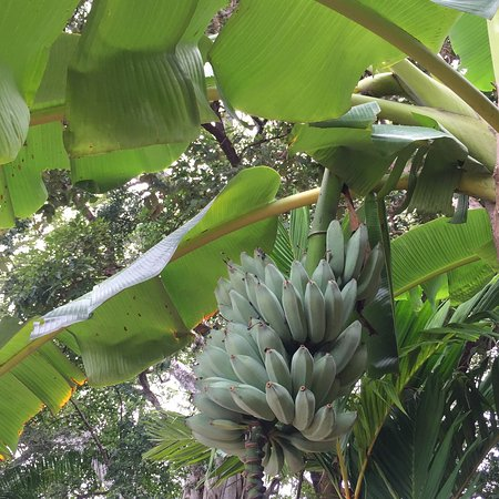 Playa Junquillal, Costa Rica: Hotelito Si Si Si