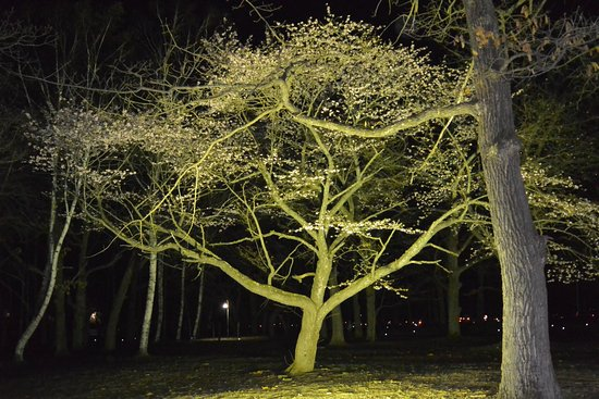 Suzuran Park