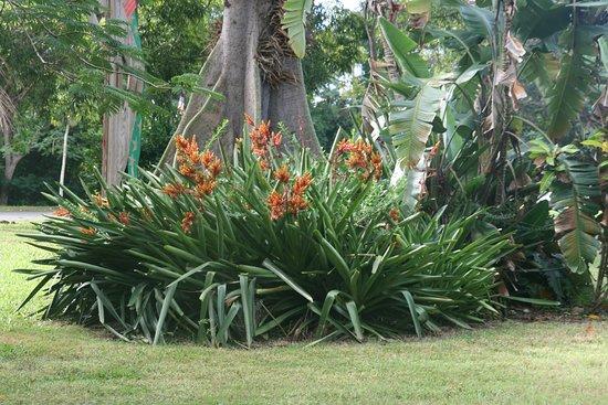 Frederiksted, St. Croix: Svært at vælge billede