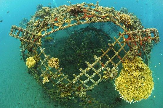 Nautica Bali Dive Center