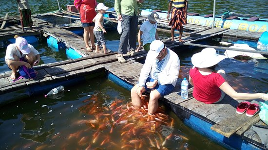 Dodanduwa, Sri Lanka: Foot therapy by Fishes