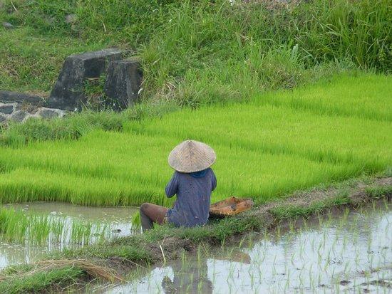 Balam Bali Villa : Vue du petit dèj