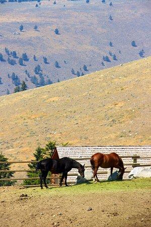 Gardiner, MT: horses at the ranch