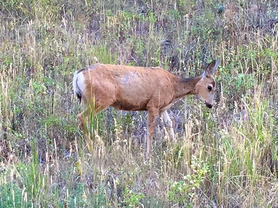 Gardiner, MT: saw more wildlife than any other day