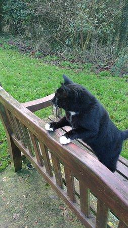 Royal Wootton Bassett, UK: a friendly cat at the park