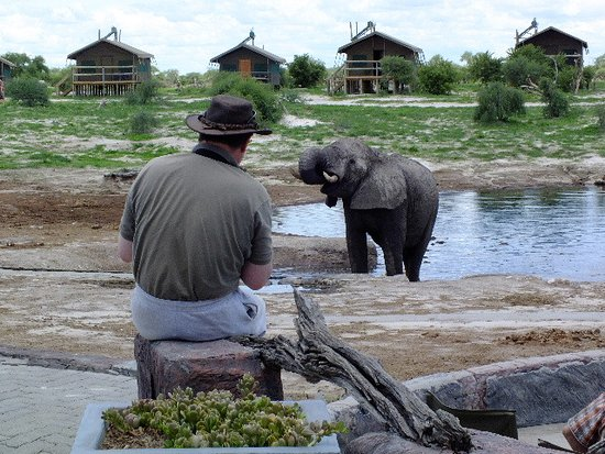 Nata, Botswana: Ellies at the bar.