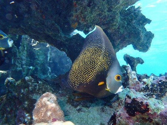 Turneffe Island, Belize: Snorkleing