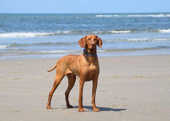 Borth, UK: Dog-friendly beach