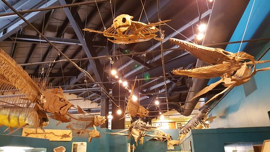 Woodland Park, CO: Rocky Mountain Dinosaur Resource Center