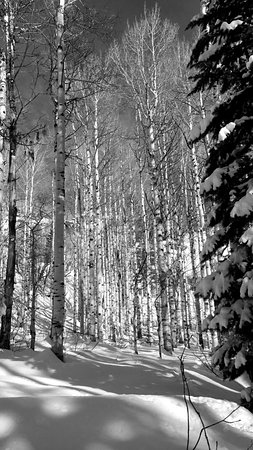 Yampatika : Gorgeous beauty of the aspens in the snow