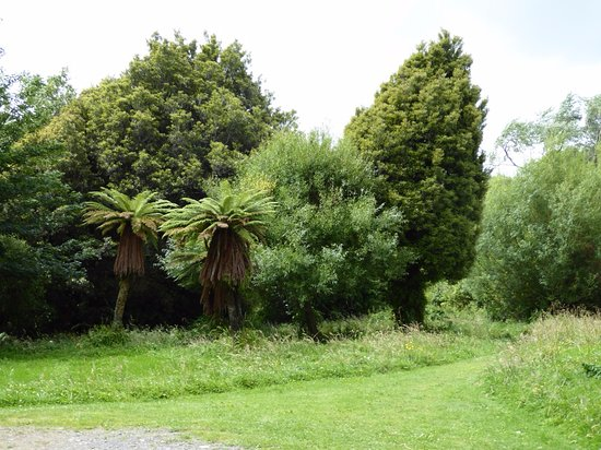 Eketahuna, New Zealand: Tent sites can be found among the trees/