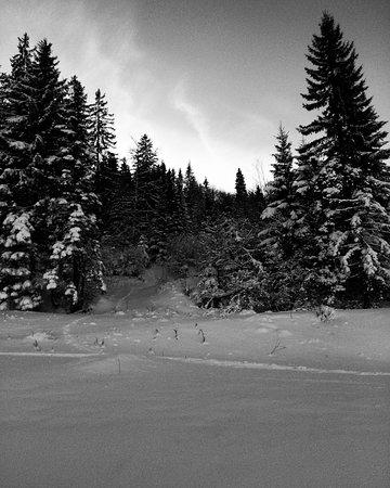 Le Piste E Gli Alberi La Neve Picture Of Olympic Center