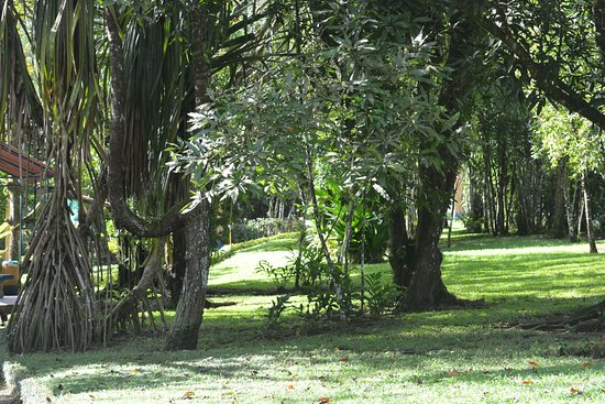 Cerro Chato Eco Lodge: shady grounds