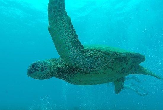 Koloa, Hawái: photo1.jpg